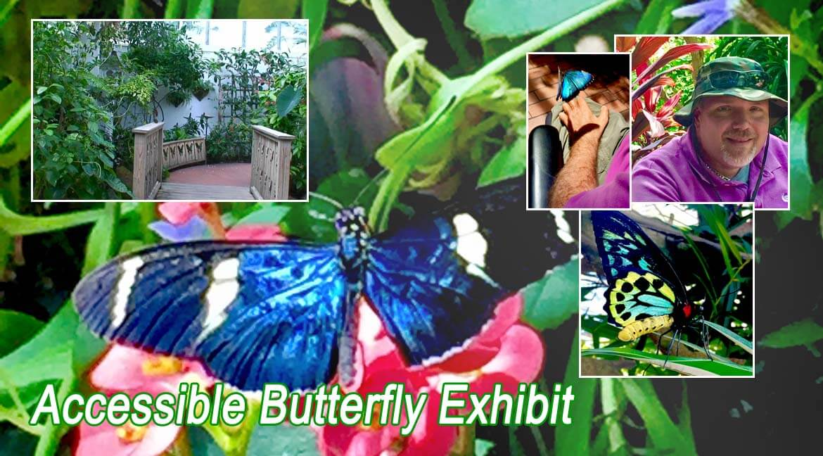 Butterfly Exhibit in the Florida Keys