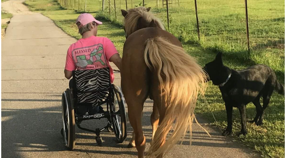 Horse Care by a Quadriplegic